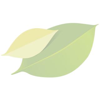 Bandnudeln grün